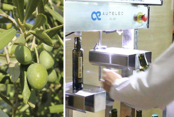 La trazabilidad en el aceite de oliva virgen extra