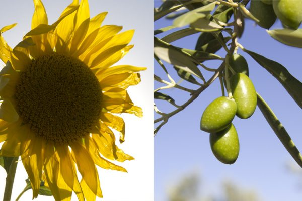 Diferencias entre aceite de oliva y aceite de semillas
