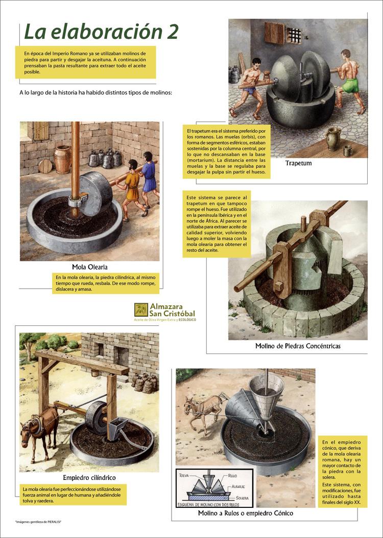 el aceite de oliva en la antigüedad