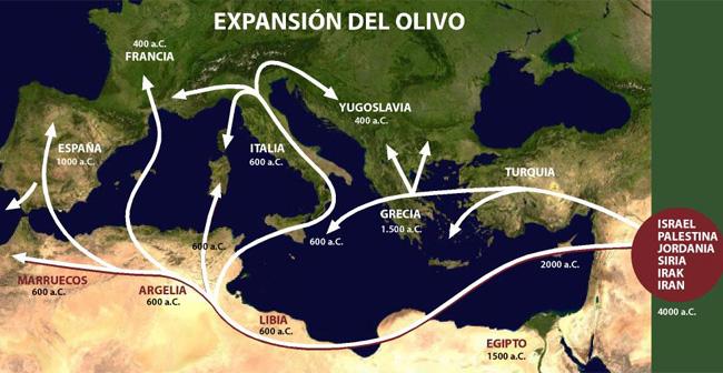 origen del olivo y la religion