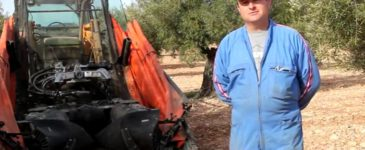 Recolección de aceituna con máquina vibradora de paraguas