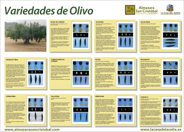 Tipos de aceite de oliva, según variedades de aceitunas
