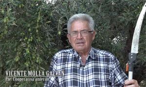 Vicente Mollá Galvañ